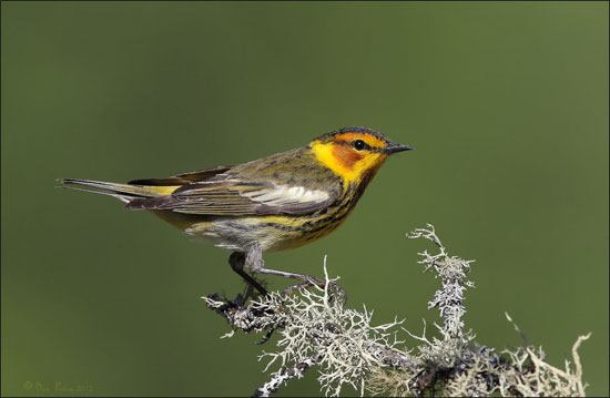 All About Birds: Spring Warbler Watching