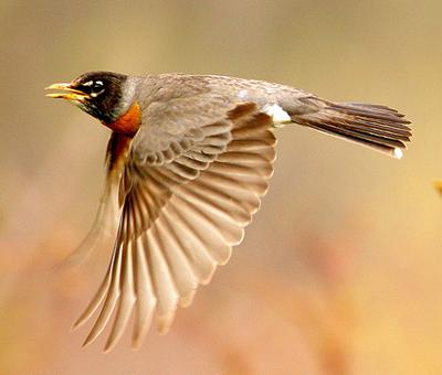 BirdNote.org: How to Prevent Birds from Colliding with Glass