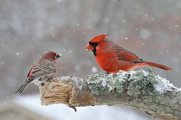 Birds & Blooms: Protecting Birds in the Winter Months