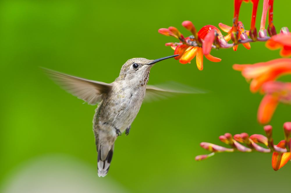 Audubon.org: How to Make Your Yard a Hummingbird Hotspot