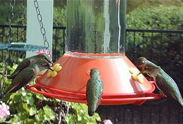 All About Hummingbirds—Hummingbird Facts and Tips for Hummingbird Pictures with the BirdCam