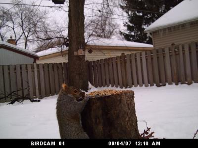 Thief Caught On BirdCam in Illinois