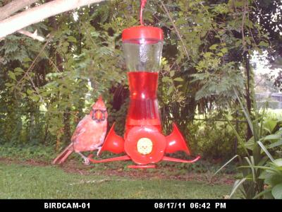 Not my usual feeder!