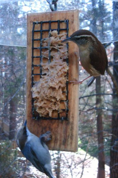 Brown Headed Nuthatch and Carolina Wren