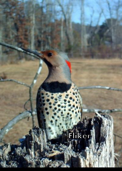 Flicker Caught on Camera in Tennessee